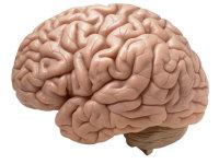 Brain_music_training